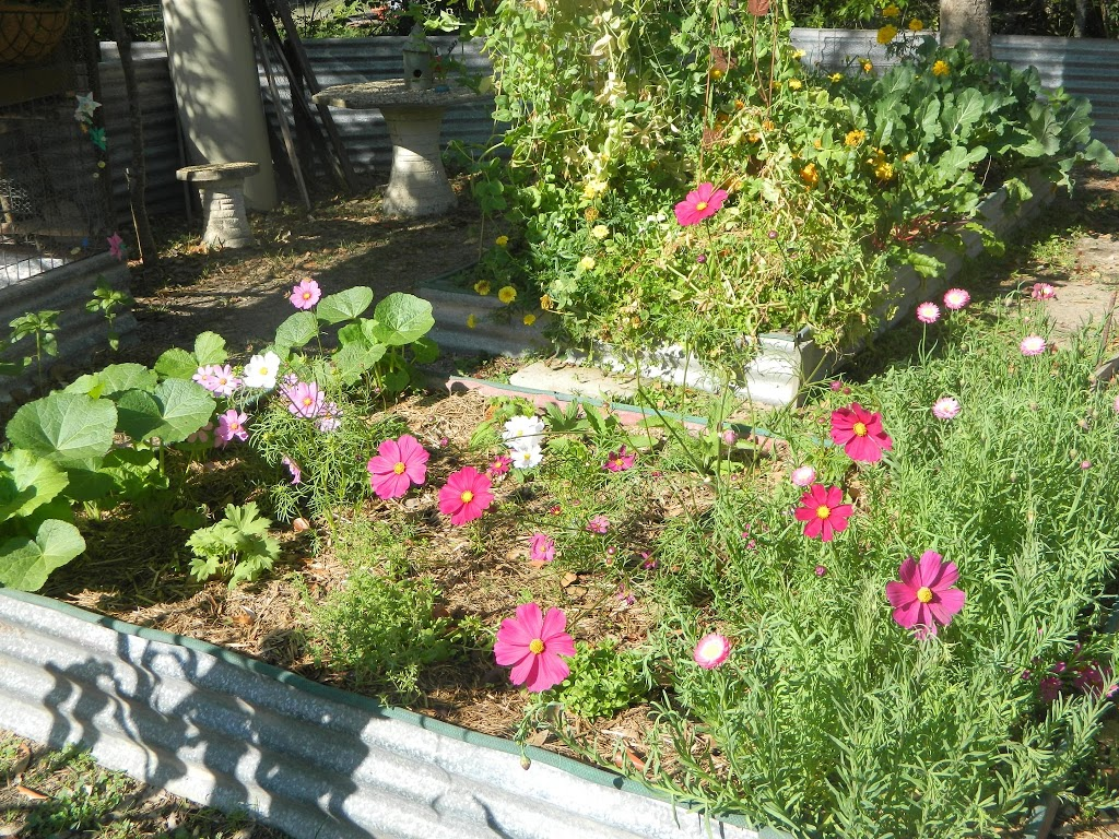 Flowers in the vege patch